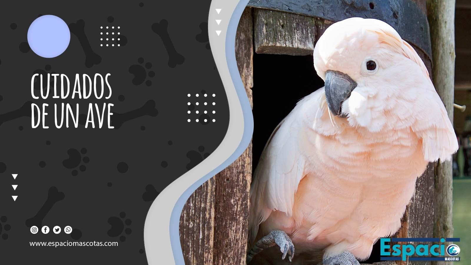 Guía de cuidados de un ave