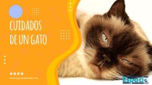 Guía de cuidados de un gato