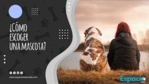 Guia sobre como elegir una mascota ideal para tu hogar