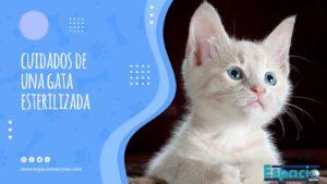 Todo sobre los cuidados de una gata esterilizada