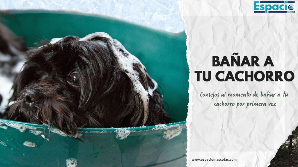 Consejos para bañar a tu cachorro por primera vez