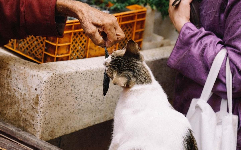 El gato puede comer pescado crudo alimento prohibido