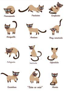 El lenguaje corporal y los movimientos de cola de los gatos