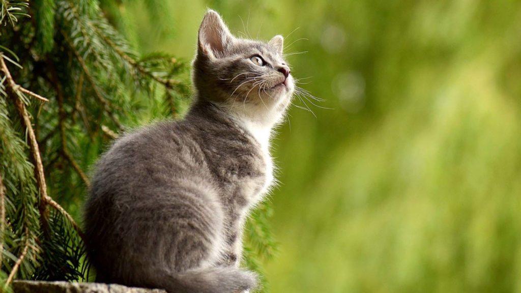 Nombres para gatos o gatas