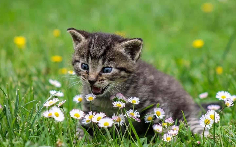 Puede un gato comer calabaza-Alimentos permitidos