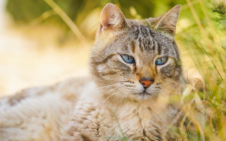 Puede un gato comer cilantro-Alimentos permitidos