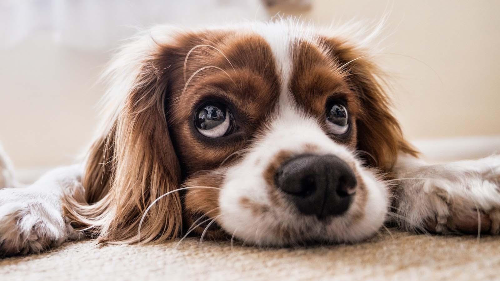 Nombres para perros y cachorros hembra y macho