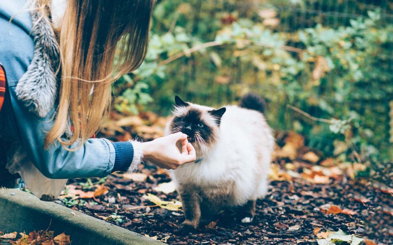 puede el gato comer hígado-Alimento prohibido