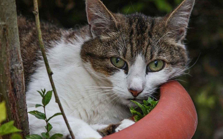 puede el gato comer lechugas en su dieta