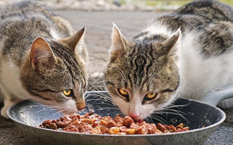puede el gato comer mortadela