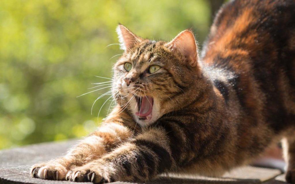 puede el gato comer salchichas